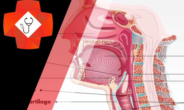 Neck radiographs: the stridulous child